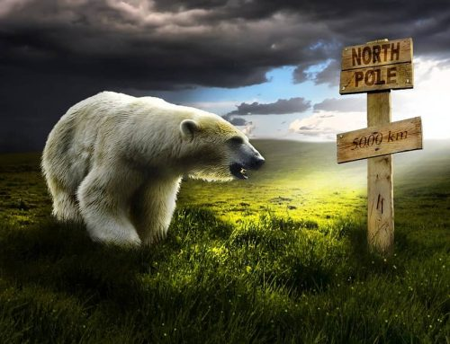 Polar Bear Partygoers